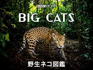 野生のネコ図鑑の画像